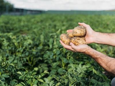 сайт для сельского хозяйства
